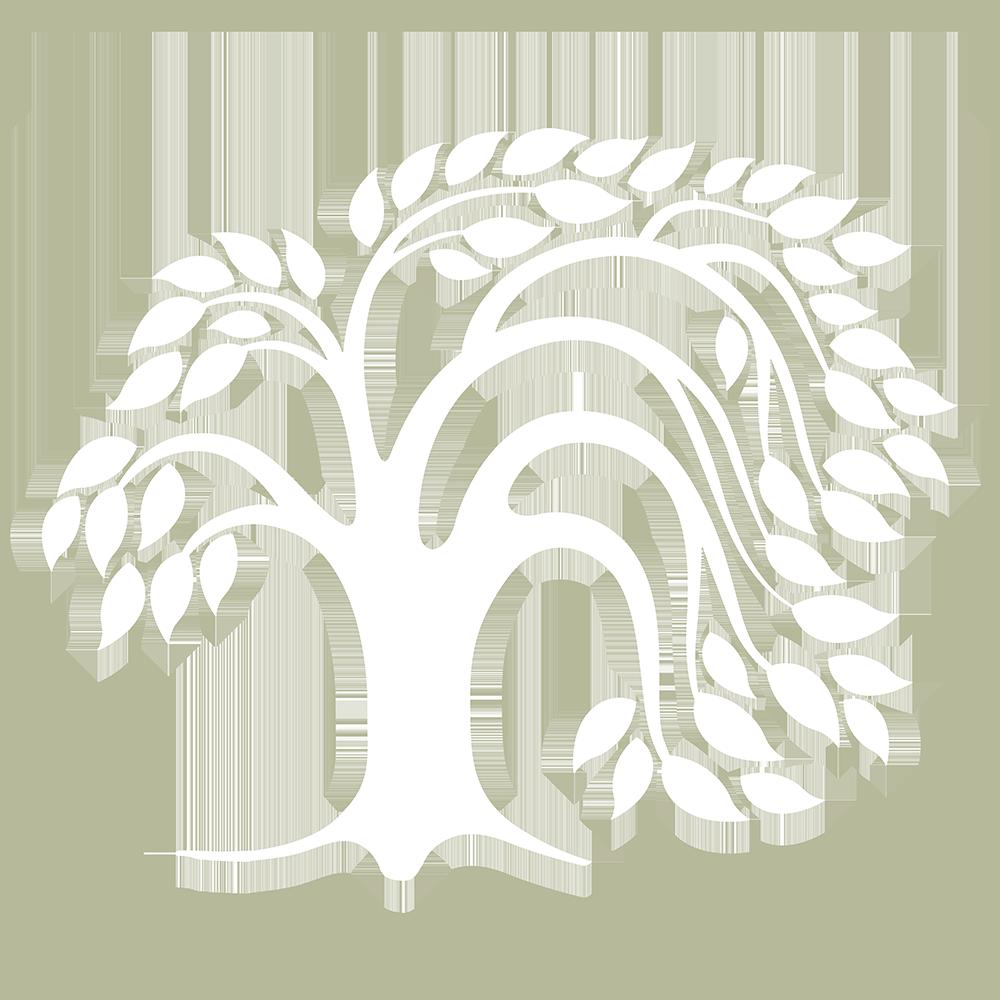 salze_arbre_transp